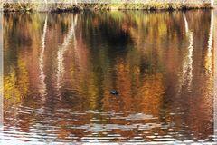 Herbstfarben im Wasser