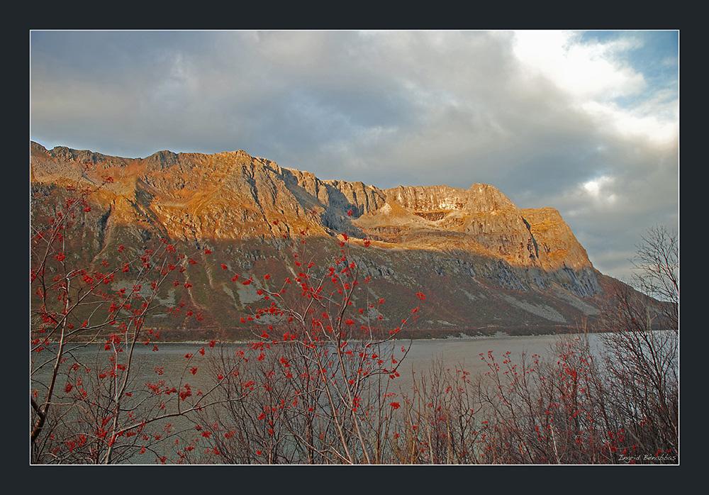 Herbstfarben in Norwegen (2)
