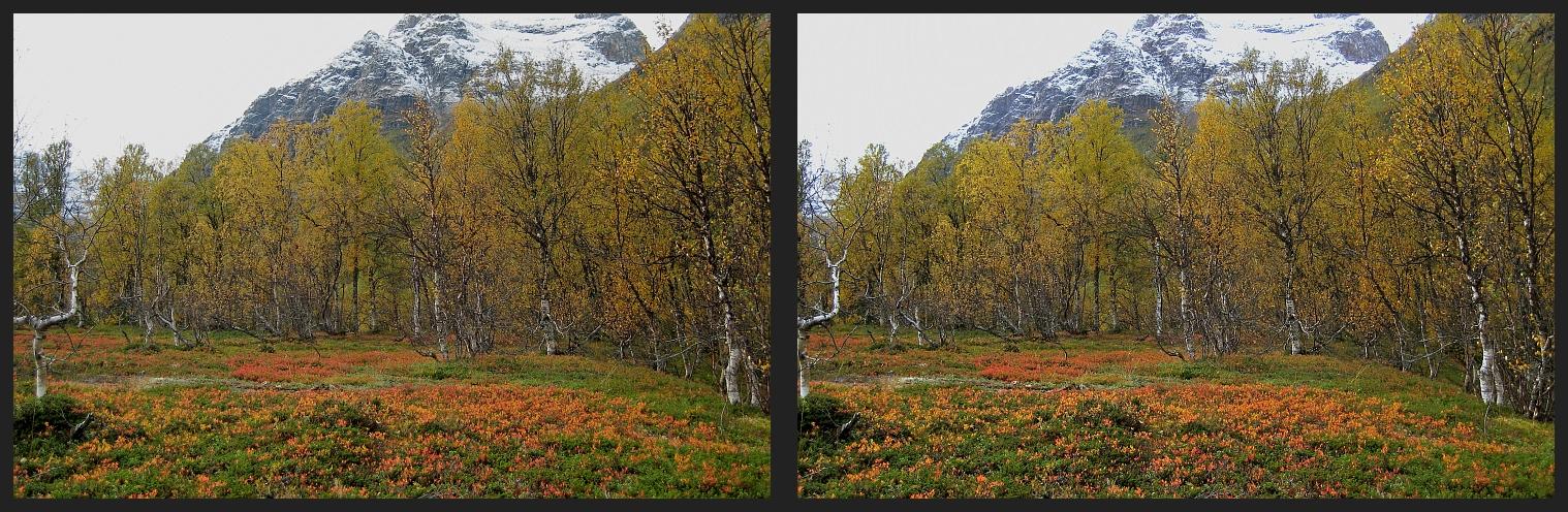 Herbstfarben in Norwegen (3)