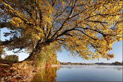 ~ Herbstfarben IV ~