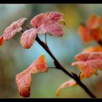 Herbstfarben IV.......