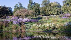 Herbstfarben, Killesberg-Park am Morgen