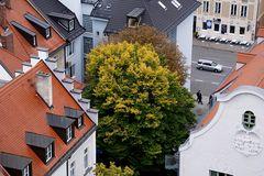 Herbstfarben mittendrinn