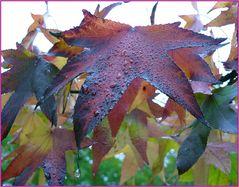 Herbstfarben-Mix