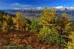 Herbstfarben nähe Illgraben