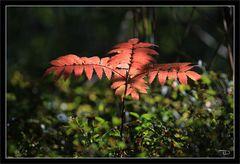 Herbstfarben sind doch schon da