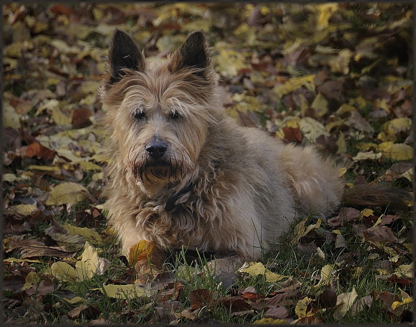 Herbstfarben - Teintes d'automne