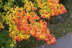 Herbstfarben über dem Weg