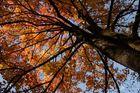 Herbstfarben_1