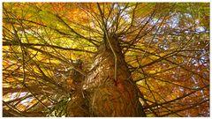 Herbstfarben2