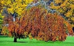 ...Herbstfarben...2