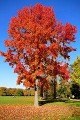 ...Herbstfarben...3