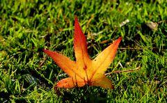 ...Herbstfarben...4