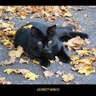 Herbstfarbene Augen