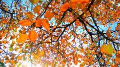 *** Herbstfarbenlichtermeer ***