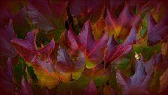 _ HerbstFarbFeuer _