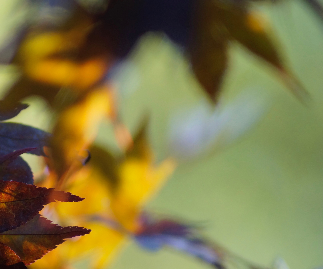 Herbstfarbspiel