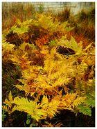 Herbstfarn