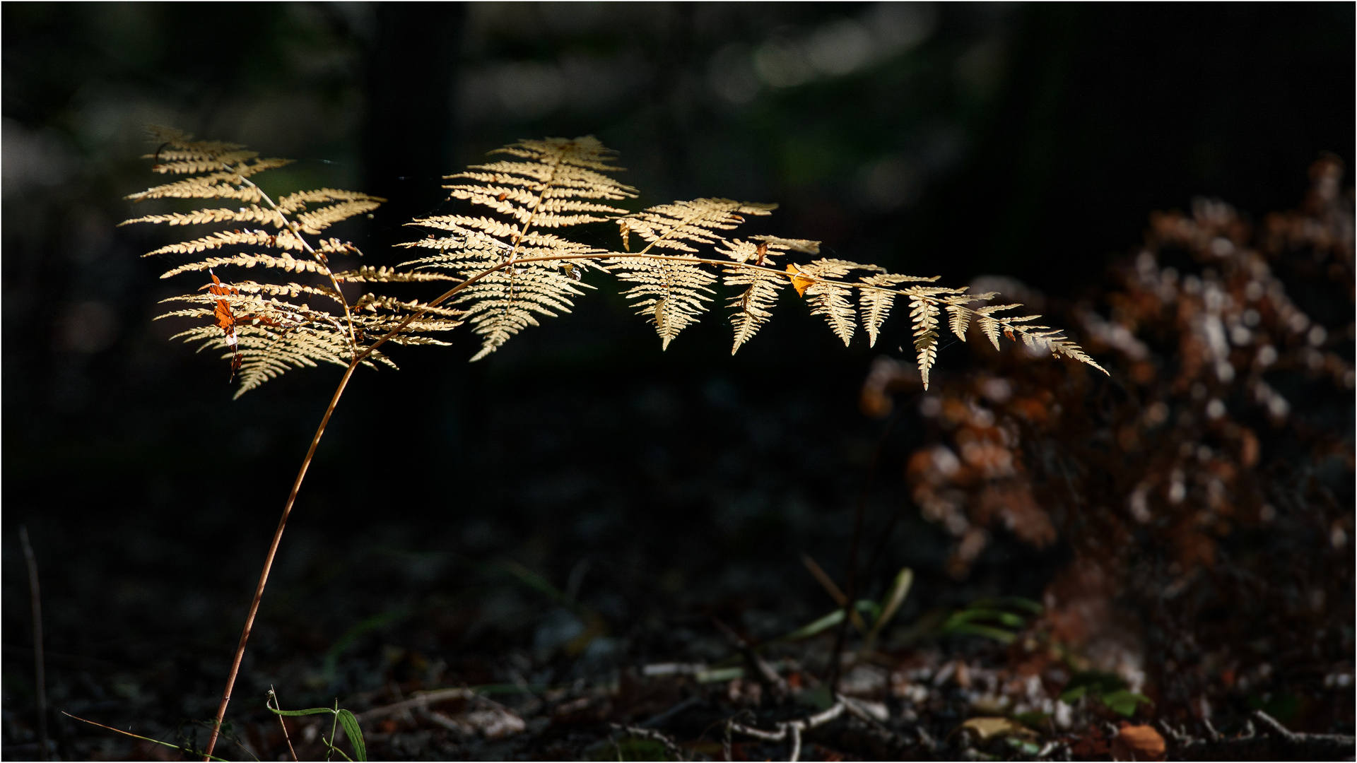 'Herbstfarn'