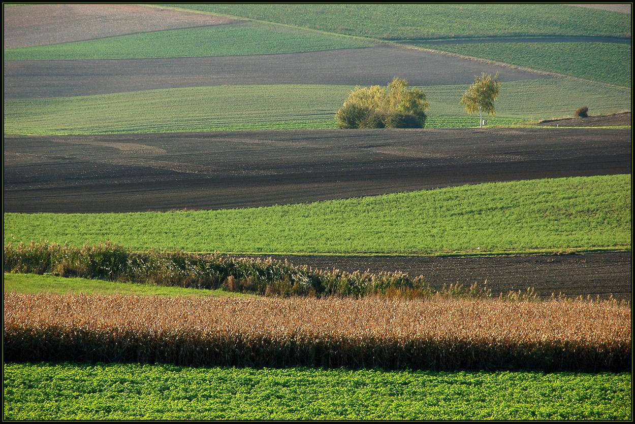 Herbstfelder
