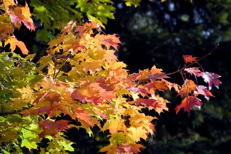 .....Herbstfeuer......