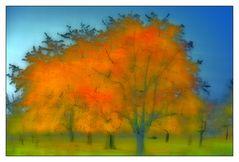 Herbstfeuer auf der Obstwiese
