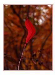 Herbstflamme
