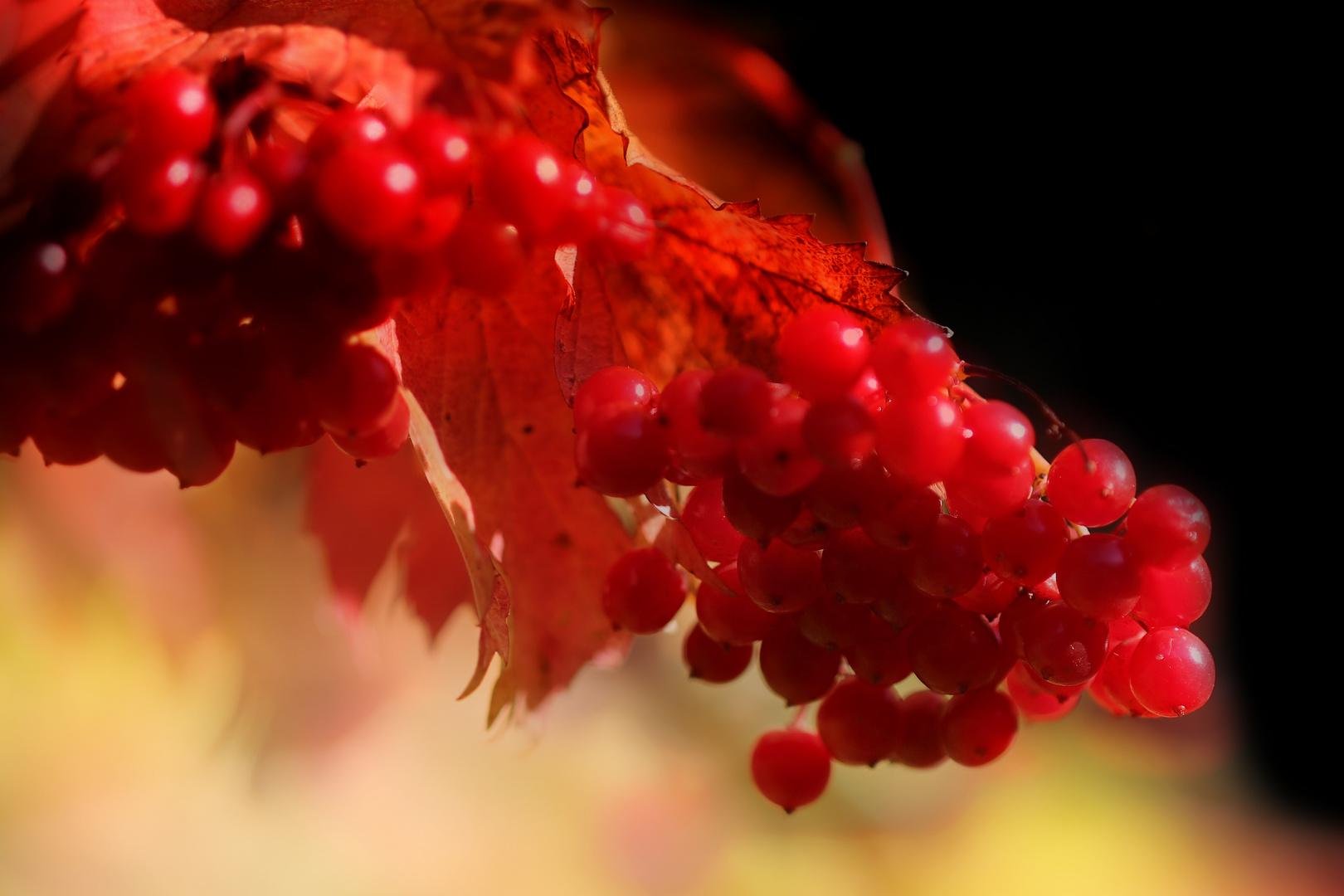 Herbstfrüchtchen