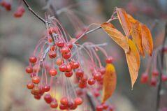 Herbstfrüchte (essbar?)