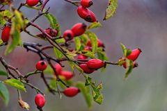 ... Herbstfrüchte ...