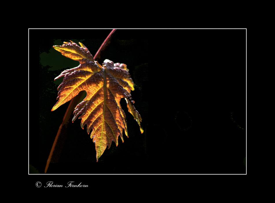 Herbstfrühlingsleuchten
