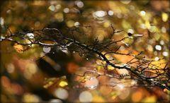 _ HerbstFunkeln _