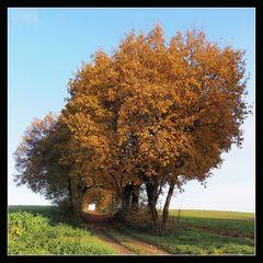 Herbstgang