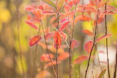 ... Herbstgedanken ...