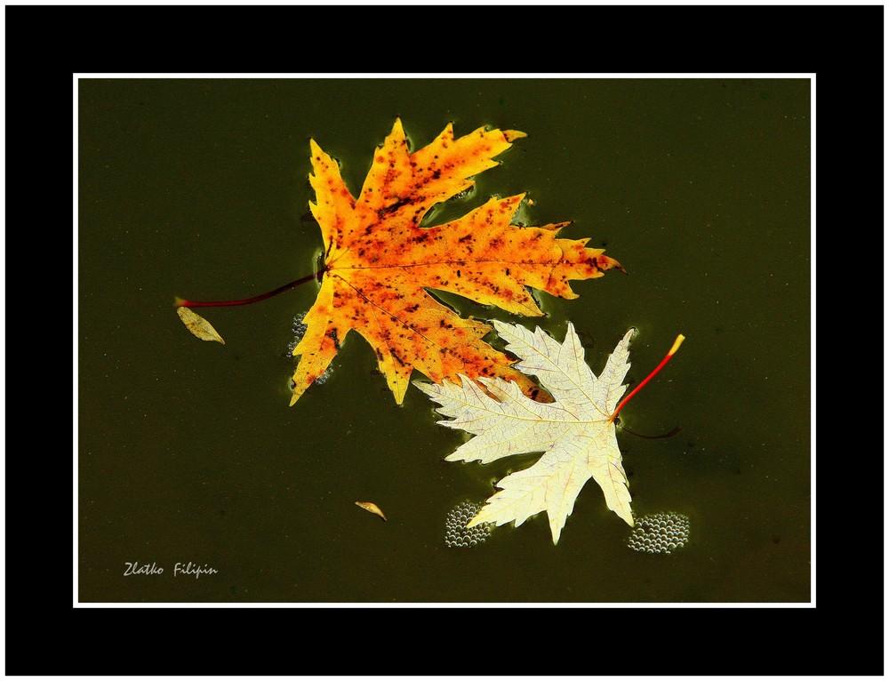 * Herbstgedanken *