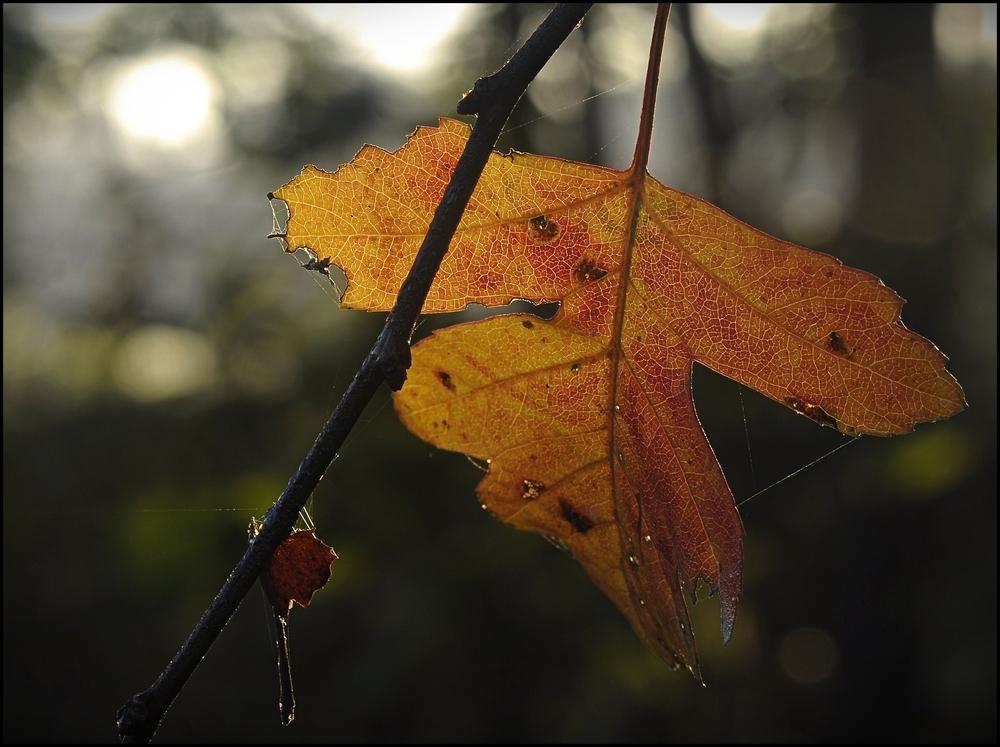 Herbstgedanken...