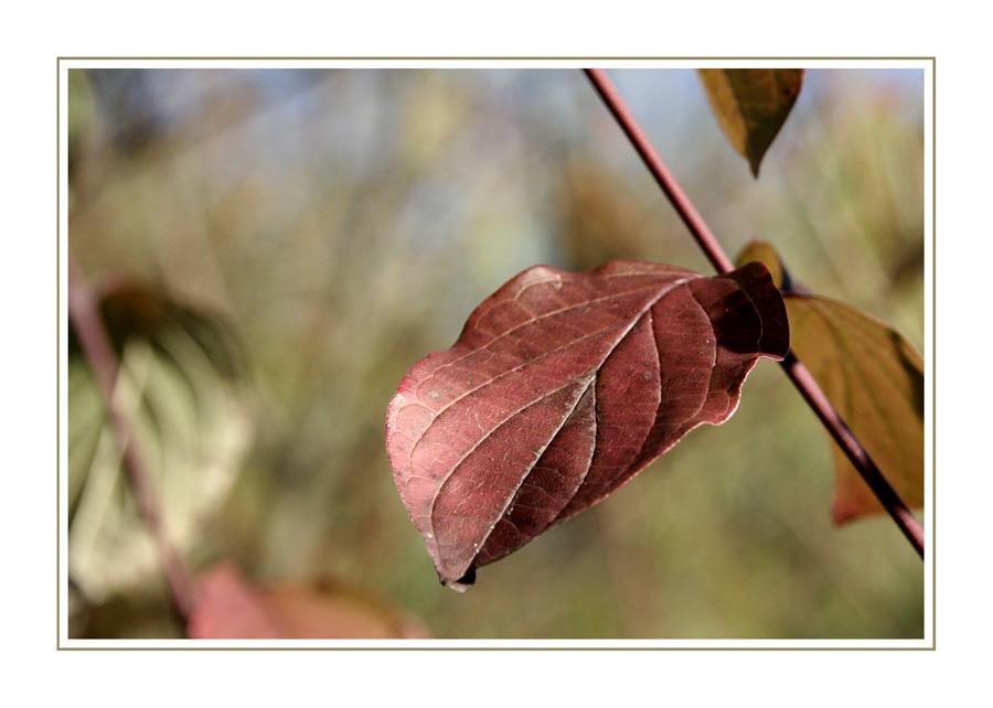 Herbstgedanken XIX