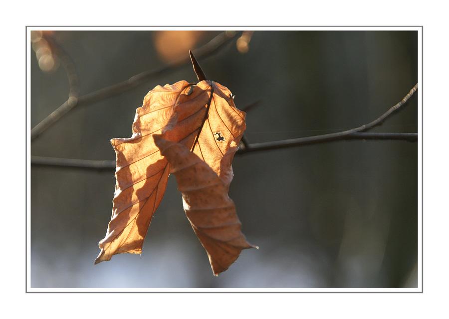 Herbstgedanken XXIII