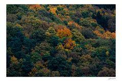 Herbstgedönse...
