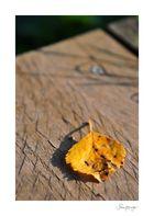Herbst(gefallen)
