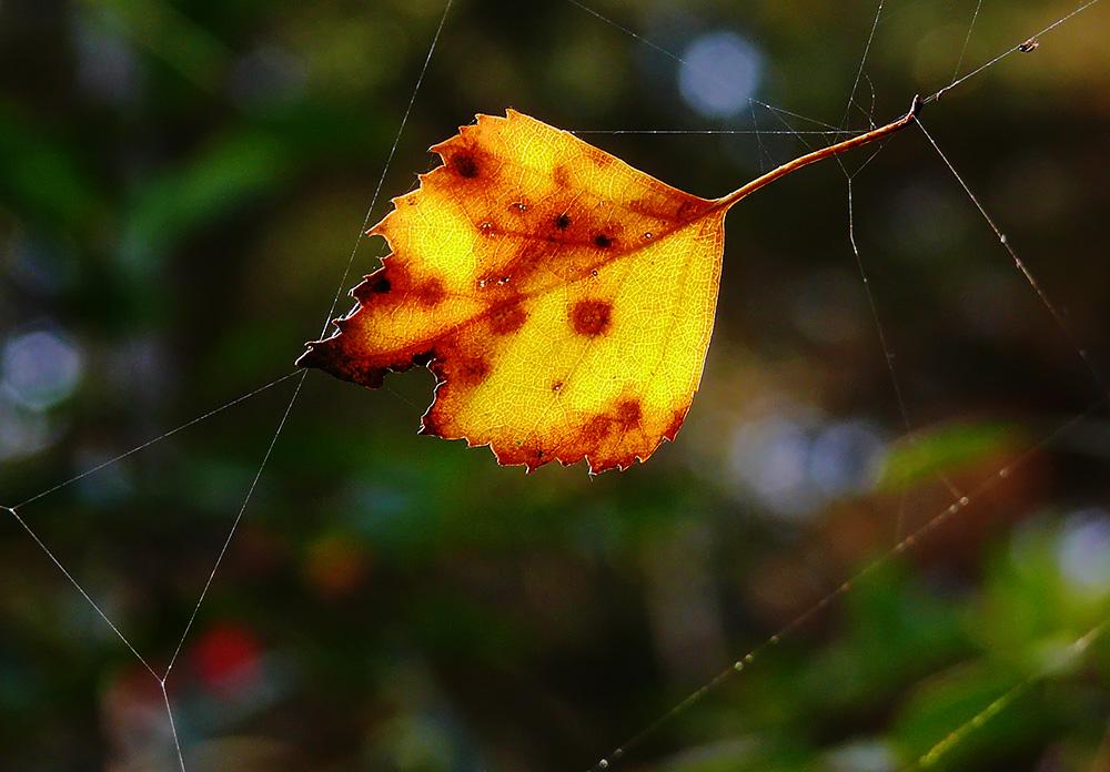 Herbstgeflecht