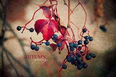 [ Herbstgefühle ]