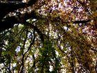 Herbstgefühle - original