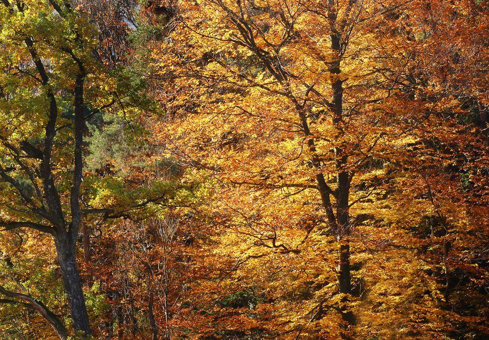 Herbstgemälde