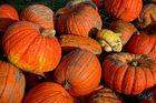 Herbstgenossen