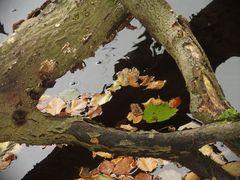 Herbstgeometrie