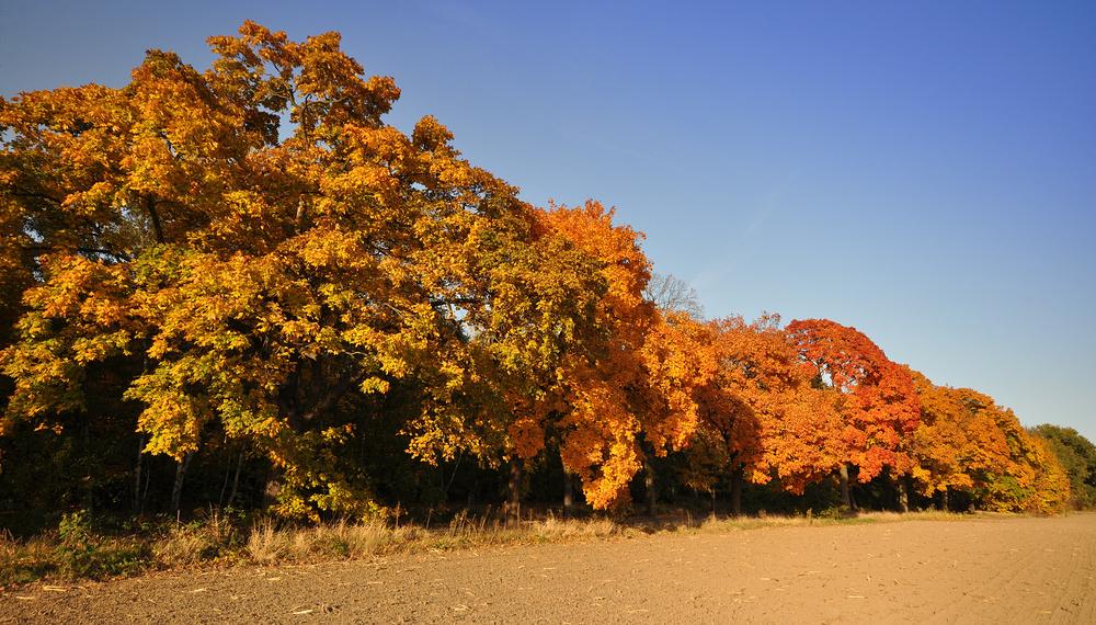 Herbstglühen..........