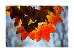 Herbstglühen II