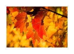 Herbstglühen III