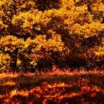 ....Herbstglühen...2